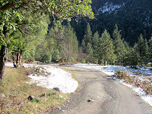 A driveway on a forested hillside near Happy Camp, CA